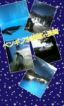 Collage 2013-08-17 21_24_49.png